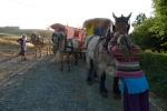 Saar samen met Gea voor de wagen , Saphire is de baas !!