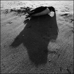 the shadow of death  Vega 12-2011