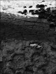 Huella Dinosaurios (Footprint)